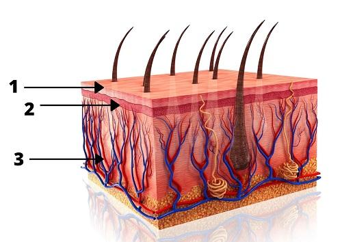 beautyvit huidverbetering huidlagen